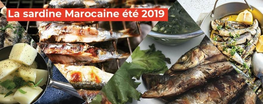 sardine marocaine ete 2019
