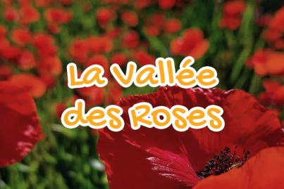 vallee, des, roses, tata, maroc